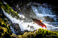 Try Try Again, Salmon jumping Alaskan falls
